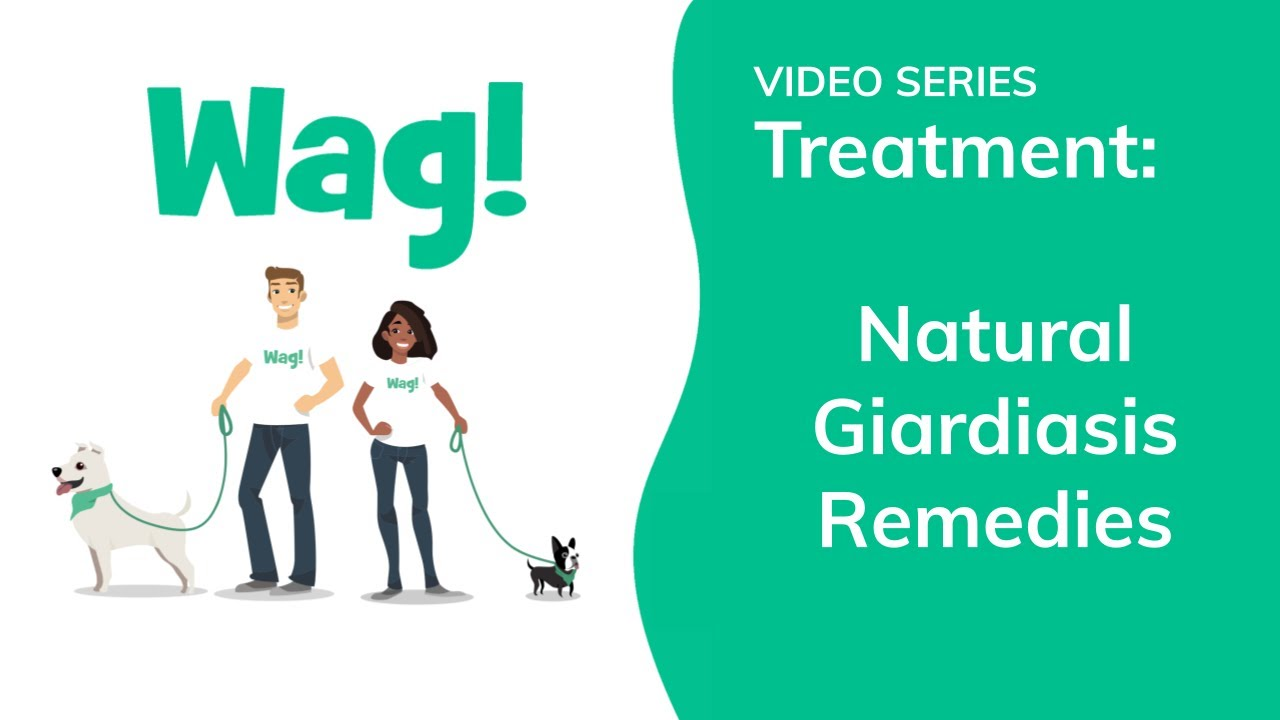 giardia how to treat naturally