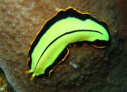 Platyhelminthes cacing. ppt, Cacing platyhelminthes ppt - budamac.hu