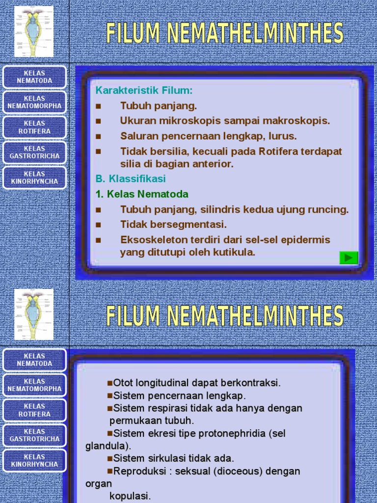 filum nemathelminthes lengkap