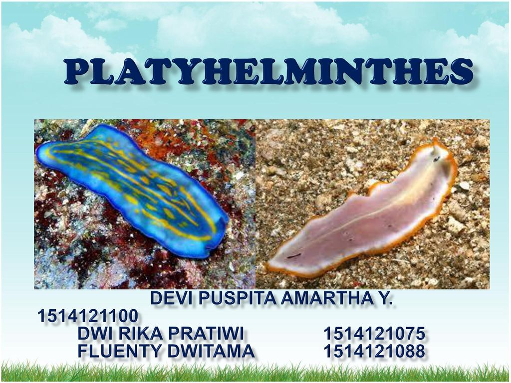 cacing platyhelminthes ppt)