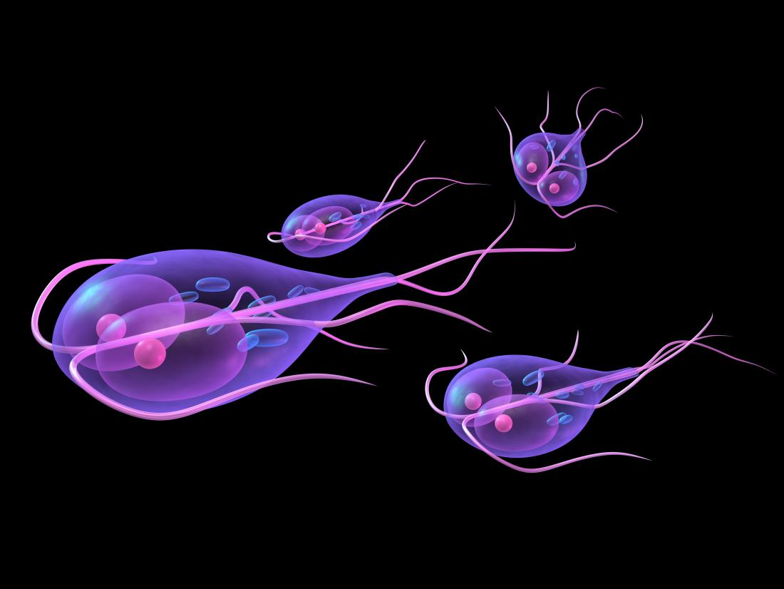 Giardia cysts in environment