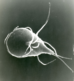 Giardia after antibiotics - sanctum.hu