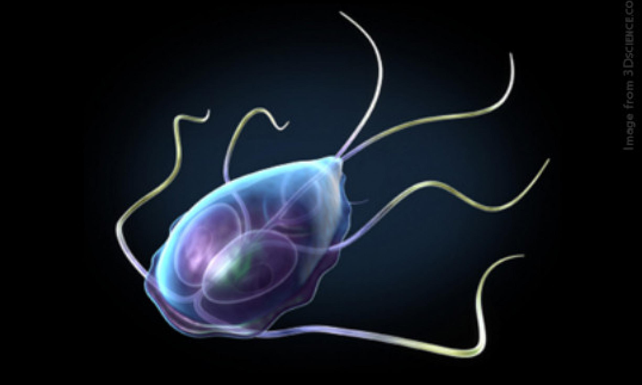 giardia protozoa treatment)