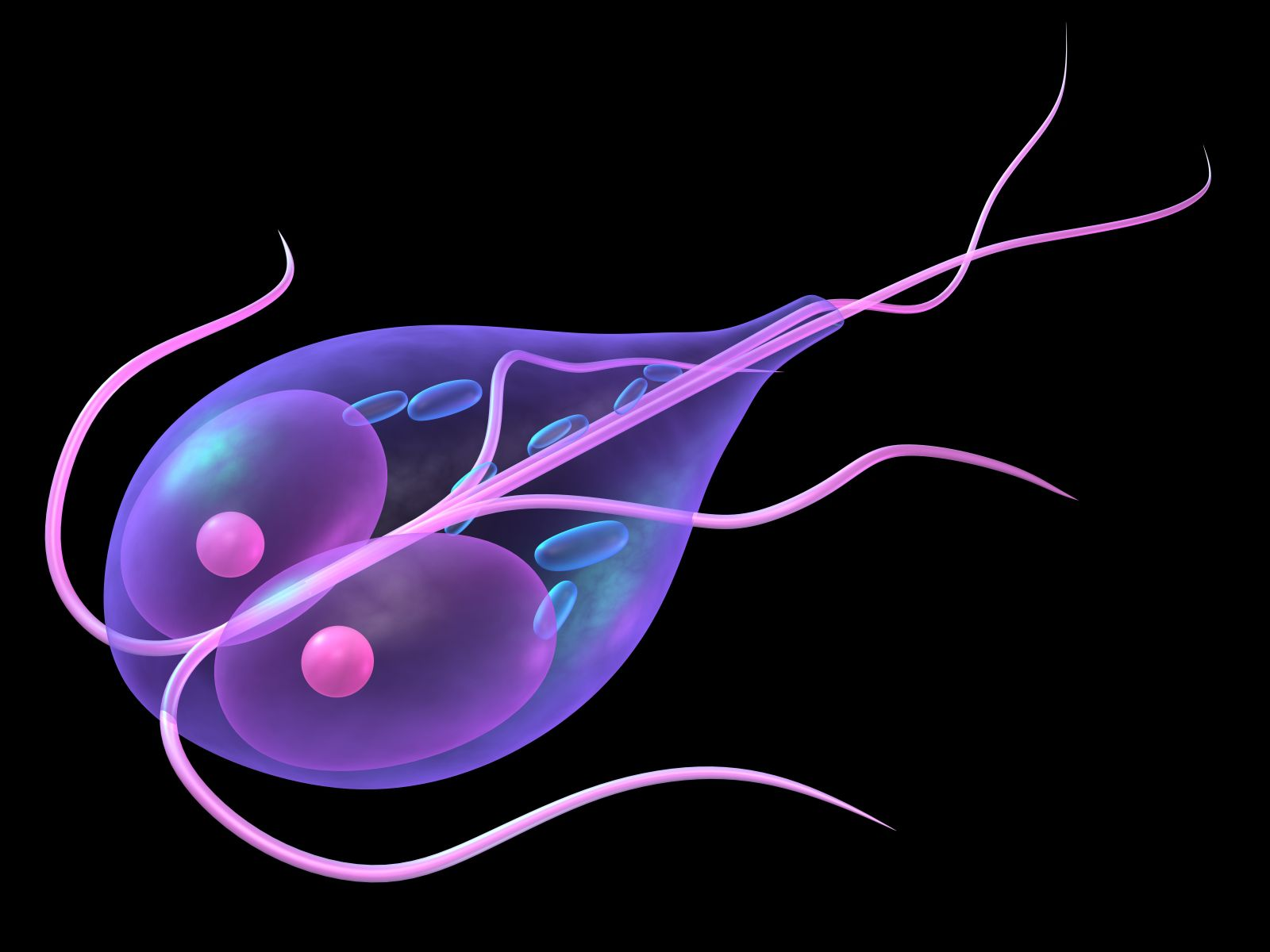 Giardia in humans left untreated