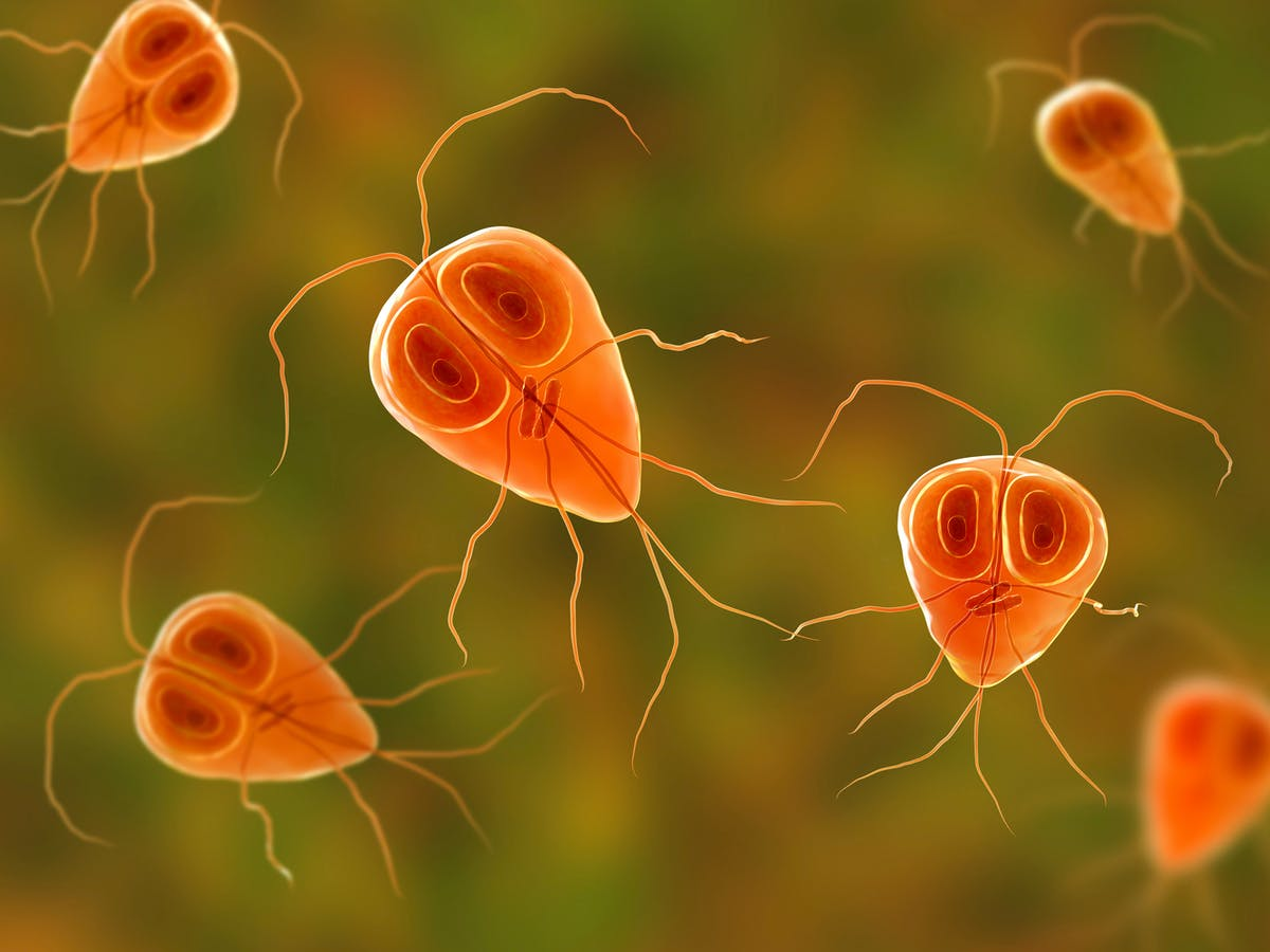 Can giardia cause weight loss - sanctum.hu