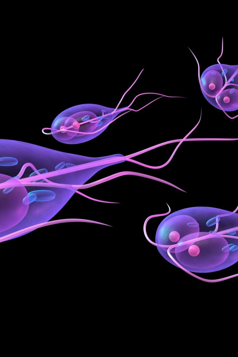 can giardia live in well water)