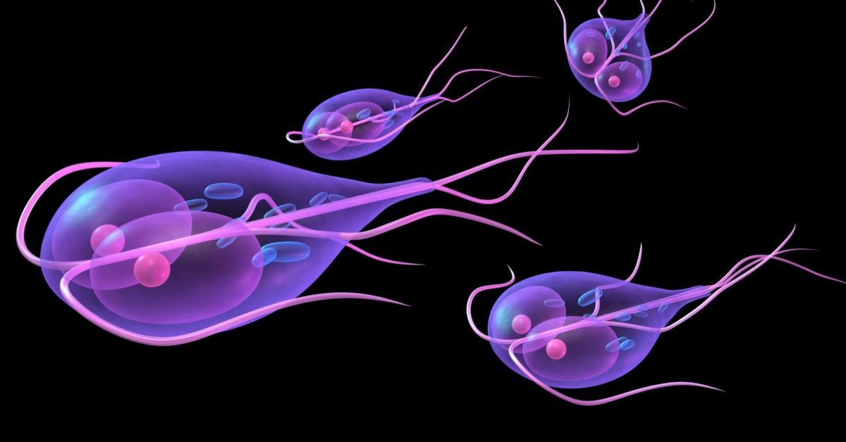 recovering from giardia diet