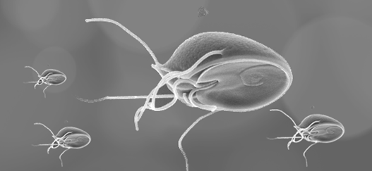 giardia steam clean