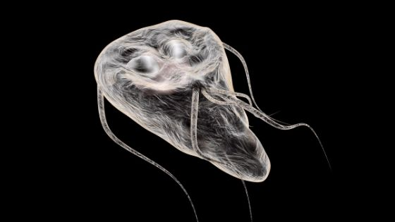 giardia bug treatment